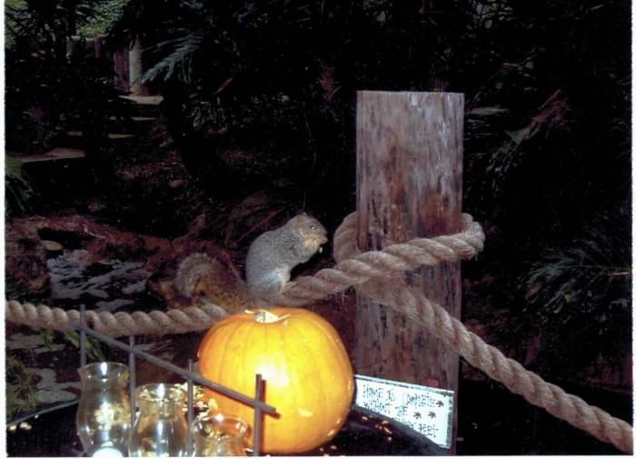 PumpkinandSquirreltwo01182015